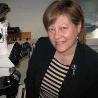 Profile photo of Carmela R. Abraham, expert at Boston University