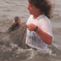 Profile photo of Leslie N. Sturmer, expert at University of Florida