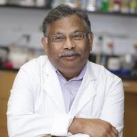 Profile photo of Mohan Raizada, expert at University of Florida