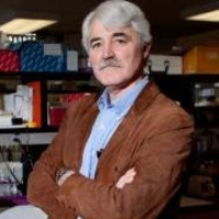 Profile photo of R. Thomas Zoeller, expert at University of Massachusetts Amherst