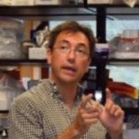 Profile photo of Sanford L. Boye, expert at University of Florida